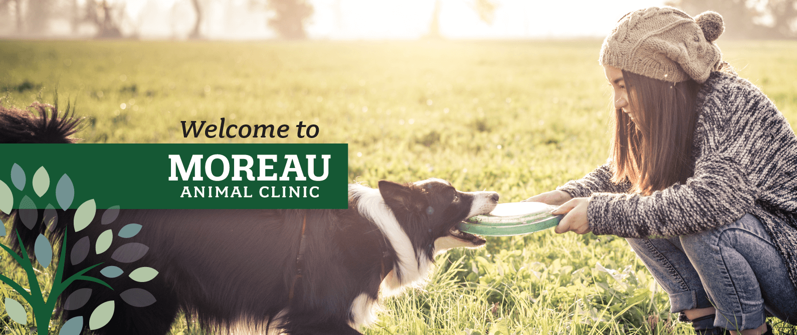 Welcome to Moreau Animal Clinic