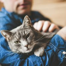 Cat in man's arms looking at camera